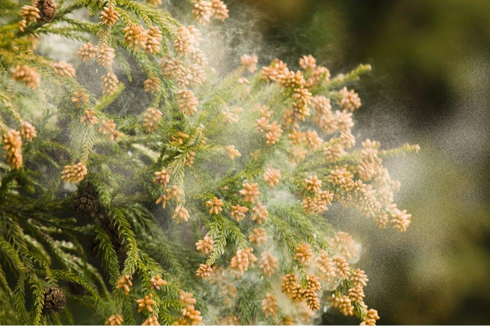 Pollen allergy symptoms for Atlanta patients